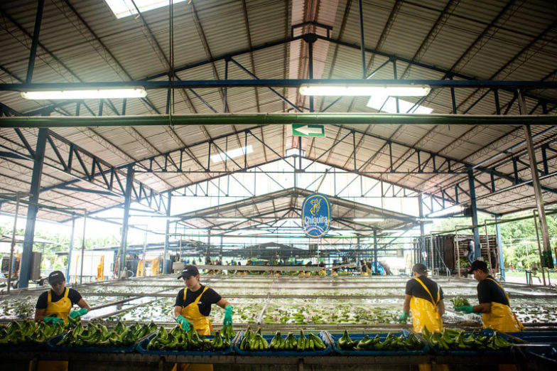 Water footprint management on Chiquita farms saves 1.8 billion liters of water each year - 4