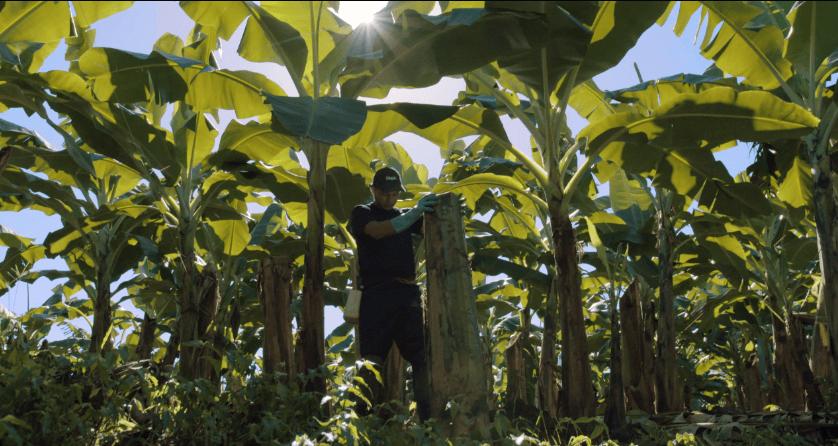 Sustainable_farming