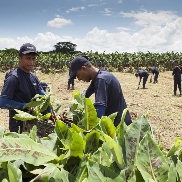 Chiquita Maintains Continuity in its Sustainable Agriculture Mission